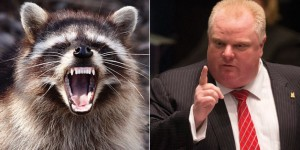 o-ROB-FORD-RACCOON-facebook