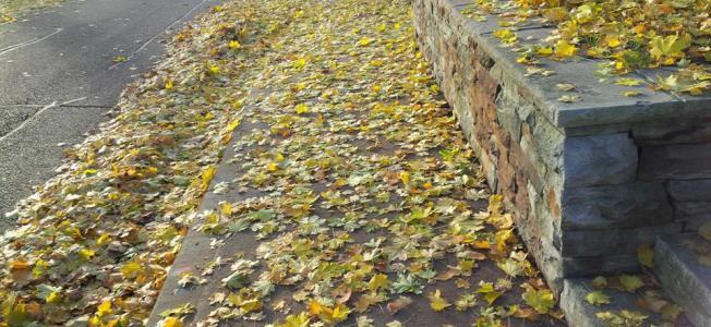 golden leaves (Debra Lary)