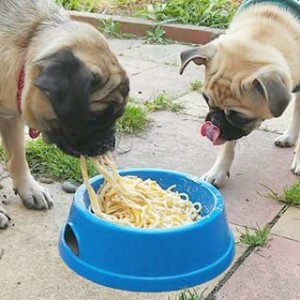 dogs-carb