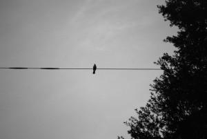 bird-on-a-wire